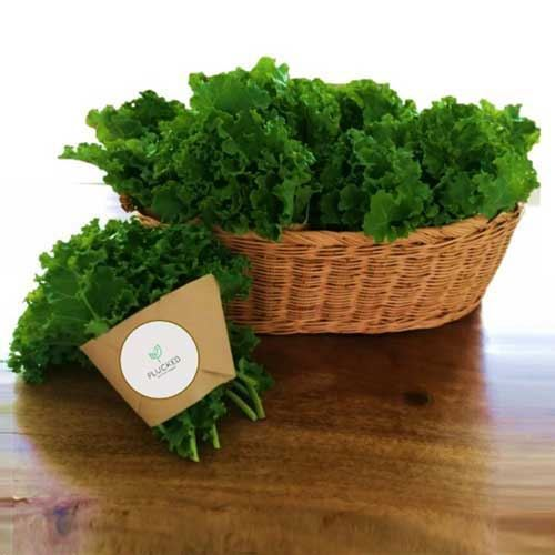 Picture of Organic Fresh Curly Kale 200g